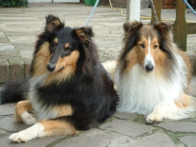 Collies Vom Hause Wagner